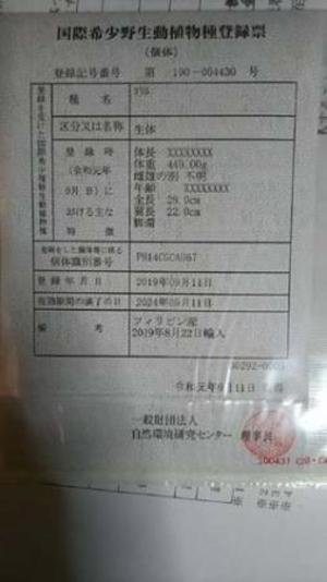ヨウム 登録記号番号 第190-004430号 ☆HPリニューアル記念特別価格☆